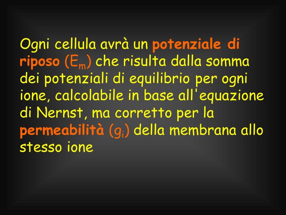 Ogni cellula avrà un potenziale di riposo (Em) che risulta dalla somma dei potenziali di equilibrio per ogni ione, calcolabile in base all equazione di Nernst, ma corretto per la permeabilità (gi) della membrana allo stesso ione
