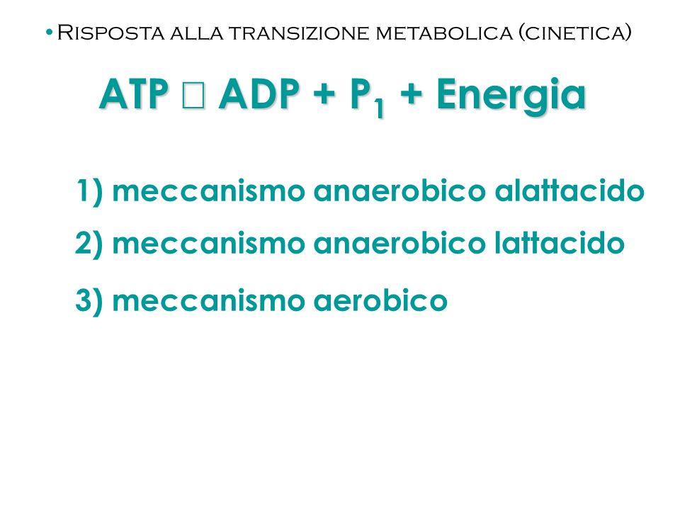 ATP Û ADP + P1 + Energia 1) meccanismo anaerobico alattacido