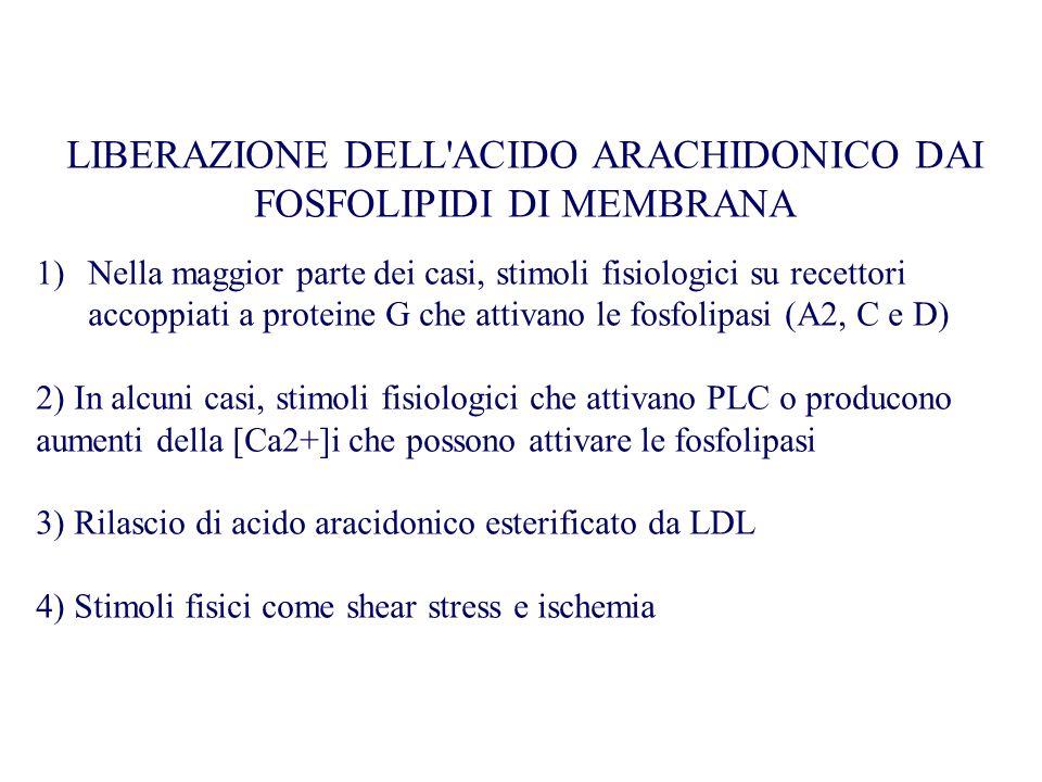 LIBERAZIONE DELL ACIDO ARACHIDONICO DAI FOSFOLIPIDI DI MEMBRANA