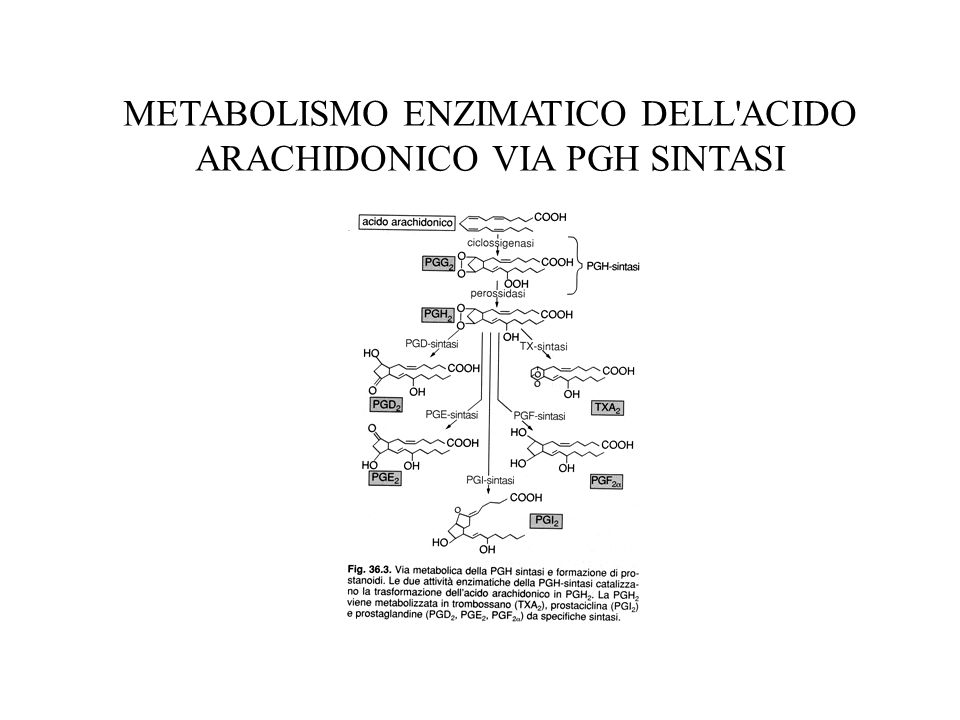 METABOLISMO ENZIMATICO DELL ACIDO ARACHIDONICO VIA PGH SINTASI