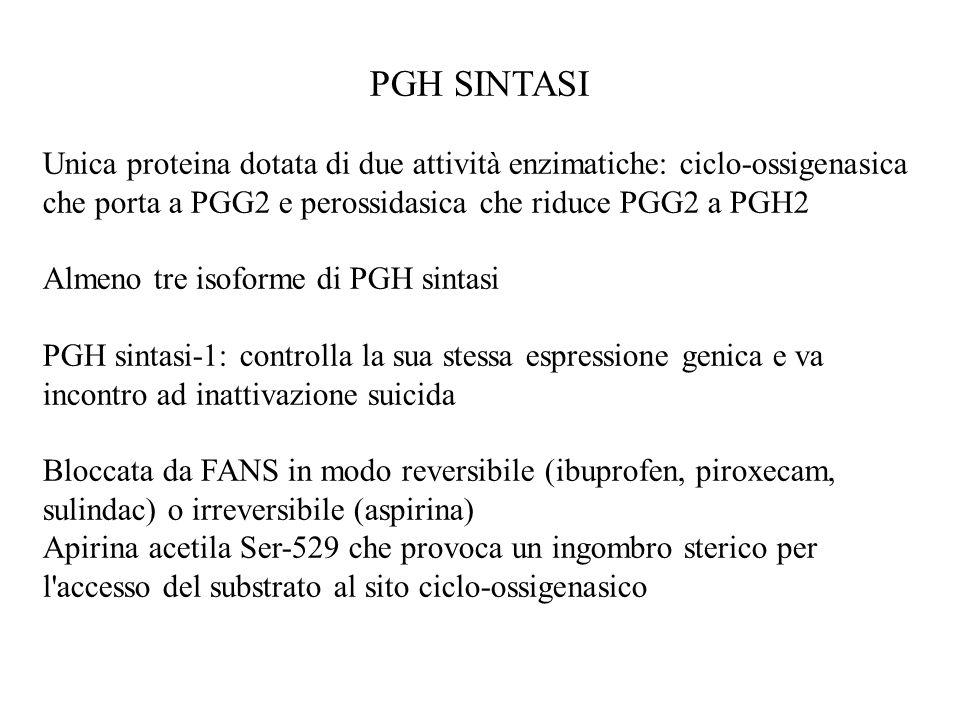 PGH SINTASI Unica proteina dotata di due attività enzimatiche: ciclo-ossigenasica che porta a PGG2 e perossidasica che riduce PGG2 a PGH2.