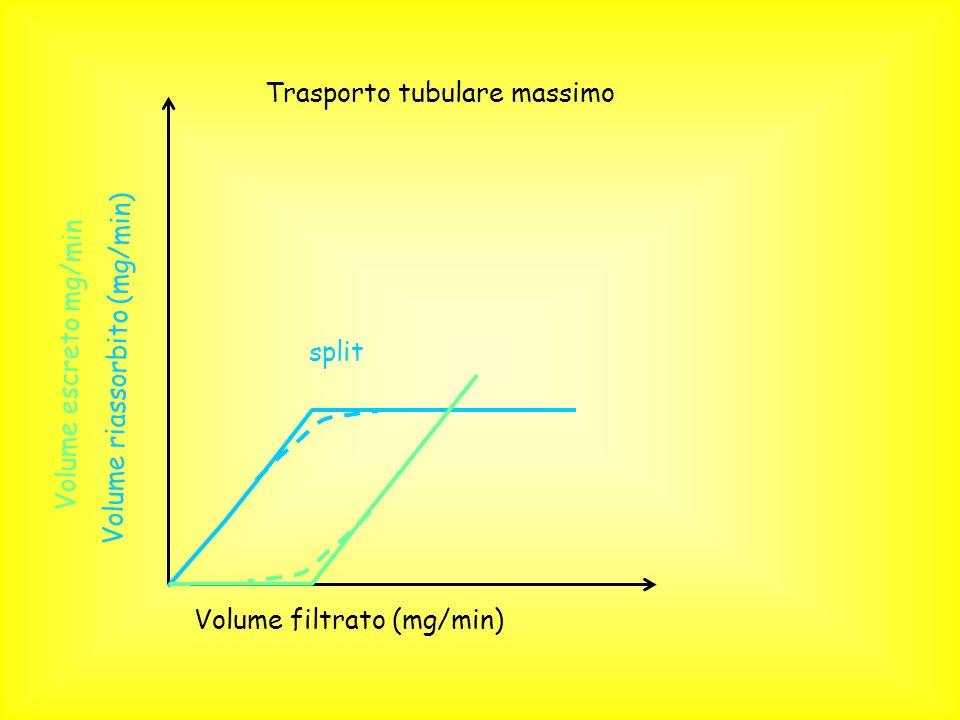 Trasporto tubulare massimo