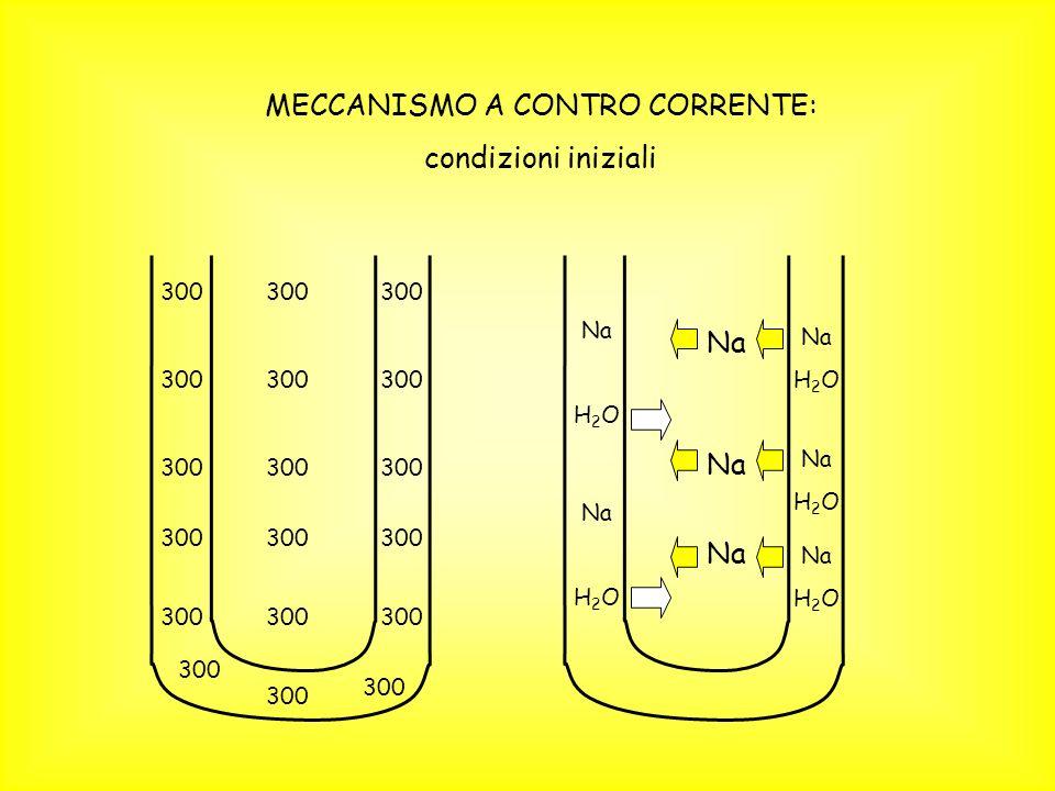 MECCANISMO A CONTRO CORRENTE: