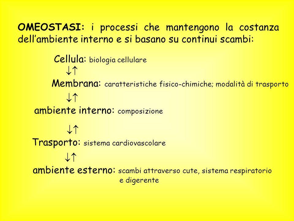 OMEOSTASI: i processi che mantengono la costanza dell'ambiente interno e si basano su continui scambi: