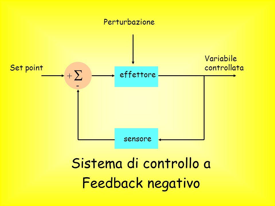  Sistema di controllo a Feedback negativo + - Perturbazione
