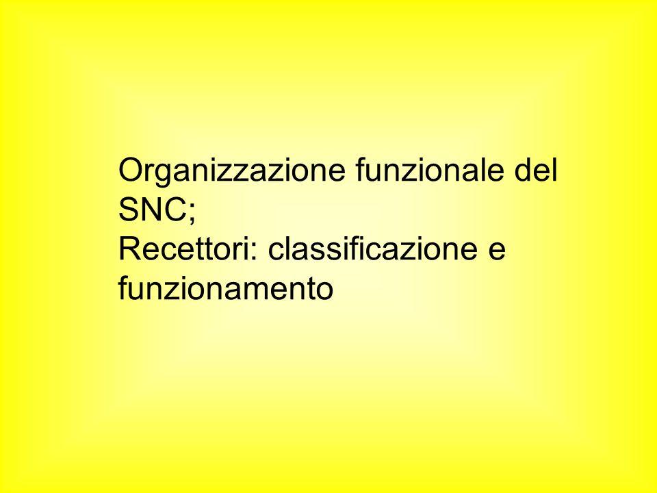 Organizzazione funzionale del SNC;