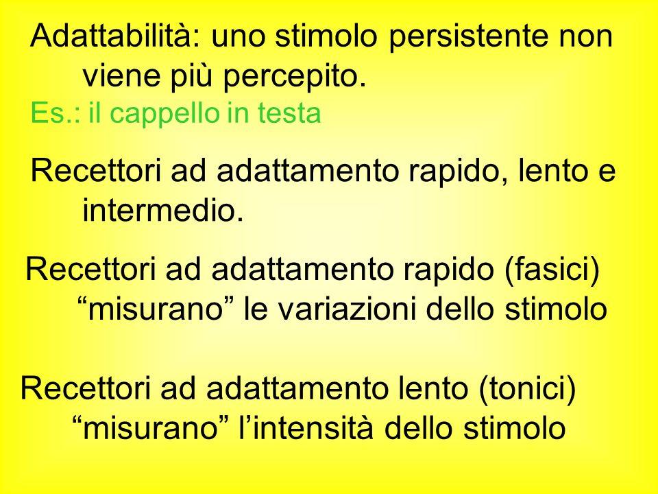 Adattabilità: uno stimolo persistente non viene più percepito.