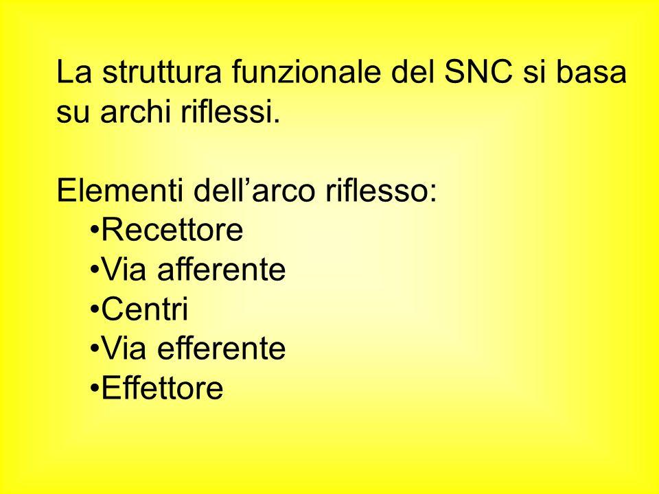 La struttura funzionale del SNC si basa su archi riflessi.