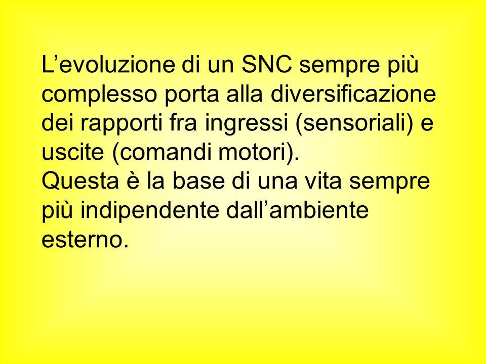 L'evoluzione di un SNC sempre più complesso porta alla diversificazione dei rapporti fra ingressi (sensoriali) e uscite (comandi motori).