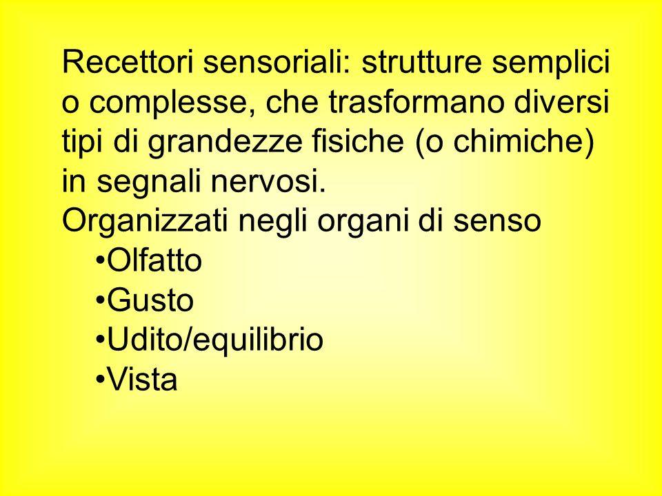 Recettori sensoriali: strutture semplici o complesse, che trasformano diversi tipi di grandezze fisiche (o chimiche) in segnali nervosi.