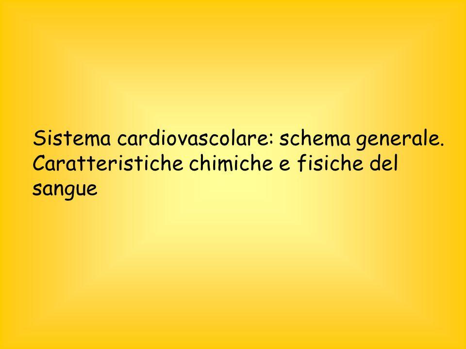 Sistema cardiovascolare: schema generale