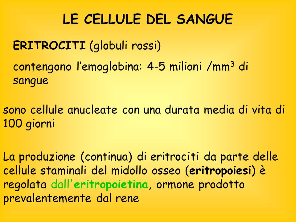 LE CELLULE DEL SANGUE ERITROCITI (globuli rossi)