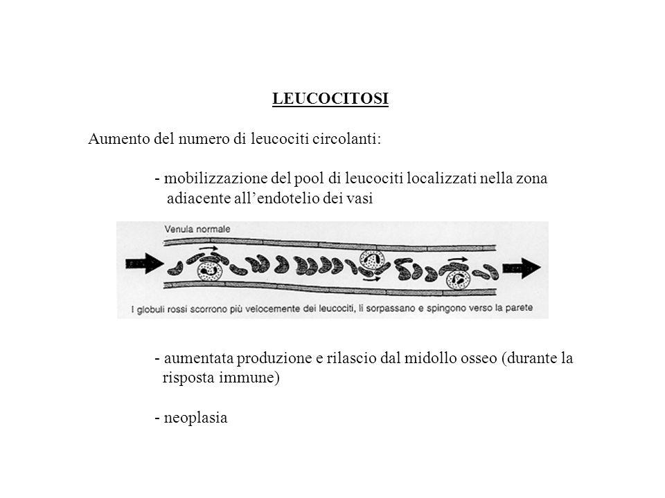 LEUCOCITOSI Aumento del numero di leucociti circolanti: