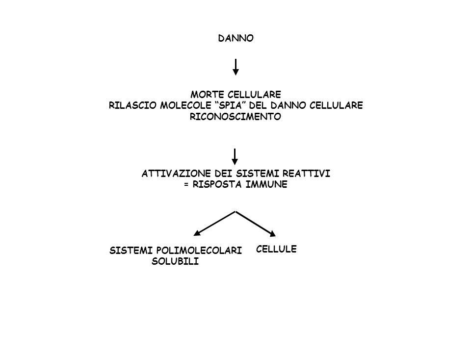 RILASCIO MOLECOLE SPIA DEL DANNO CELLULARE