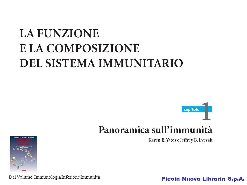 Piccin Nuova Libraria S.p.A.