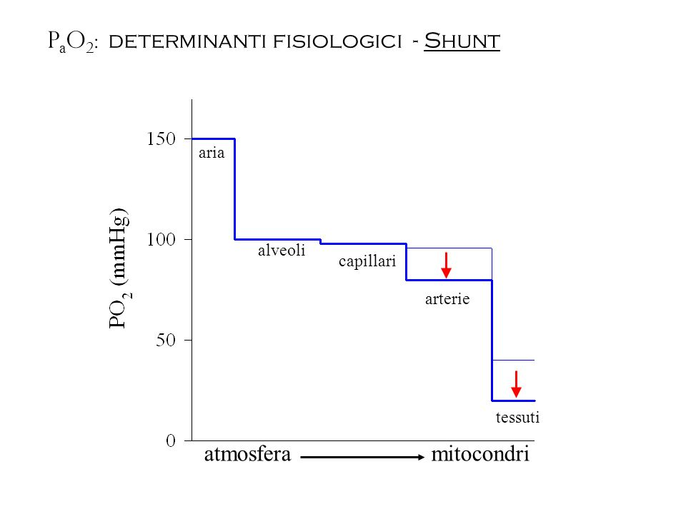 PaO2: determinanti fisiologici - Shunt