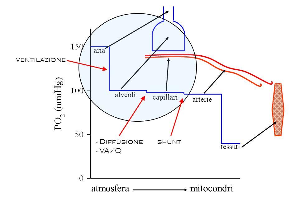 atmosfera mitocondri aria alveoli ventilazione capillari arterie