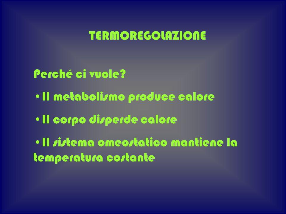 TERMOREGOLAZIONE Perché ci vuole. Il metabolismo produce calore.
