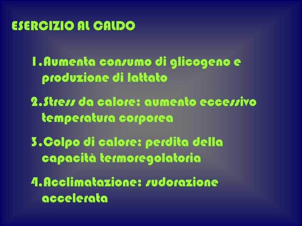 ESERCIZIO AL CALDO Aumenta consumo di glicogeno e produzione di lattato. Stress da calore: aumento eccessivo temperatura corporea.