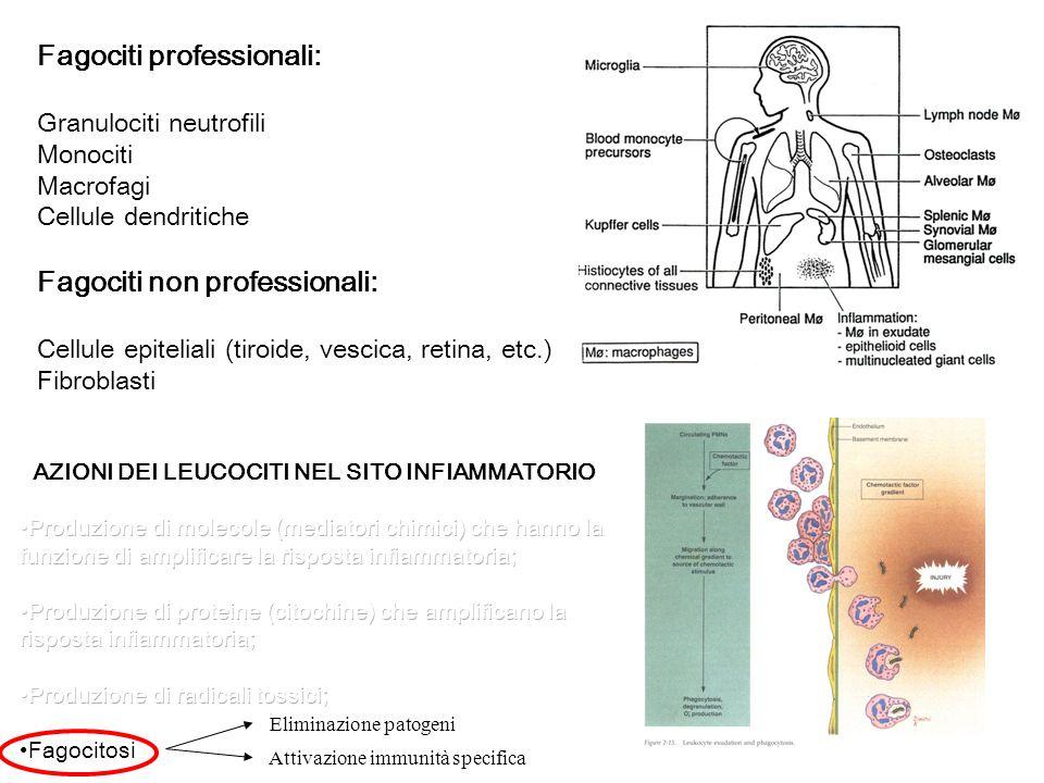 Fagociti professionali: