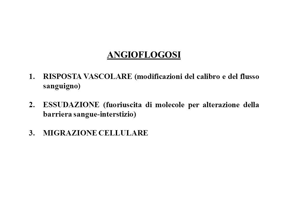ANGIOFLOGOSI RISPOSTA VASCOLARE (modificazioni del calibro e del flusso sanguigno)