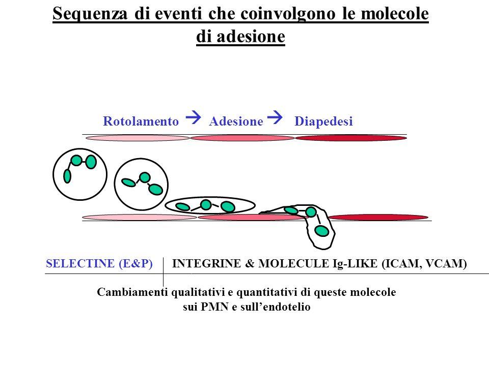 Sequenza di eventi che coinvolgono le molecole di adesione