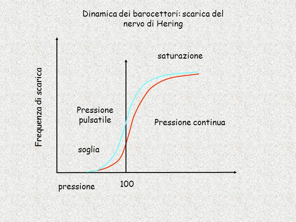 Dinamica dei barocettori: scarica del nervo di Hering