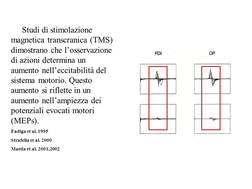 A) Studi di stimolazione magnetica transcranica (TMS) dimostrano che l'osservazione di azioni determina un aumento nell'eccitabilità del sistema motorio. Questo aumento si riflette in un aumento nell'ampiezza dei potenziali evocati motori (MEPs).