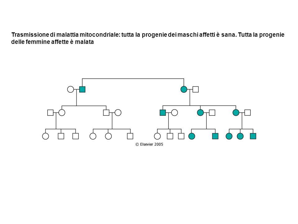 Trasmissione di malattia mitocondriale: tutta la progenie dei maschi affetti è sana. Tutta la progenie