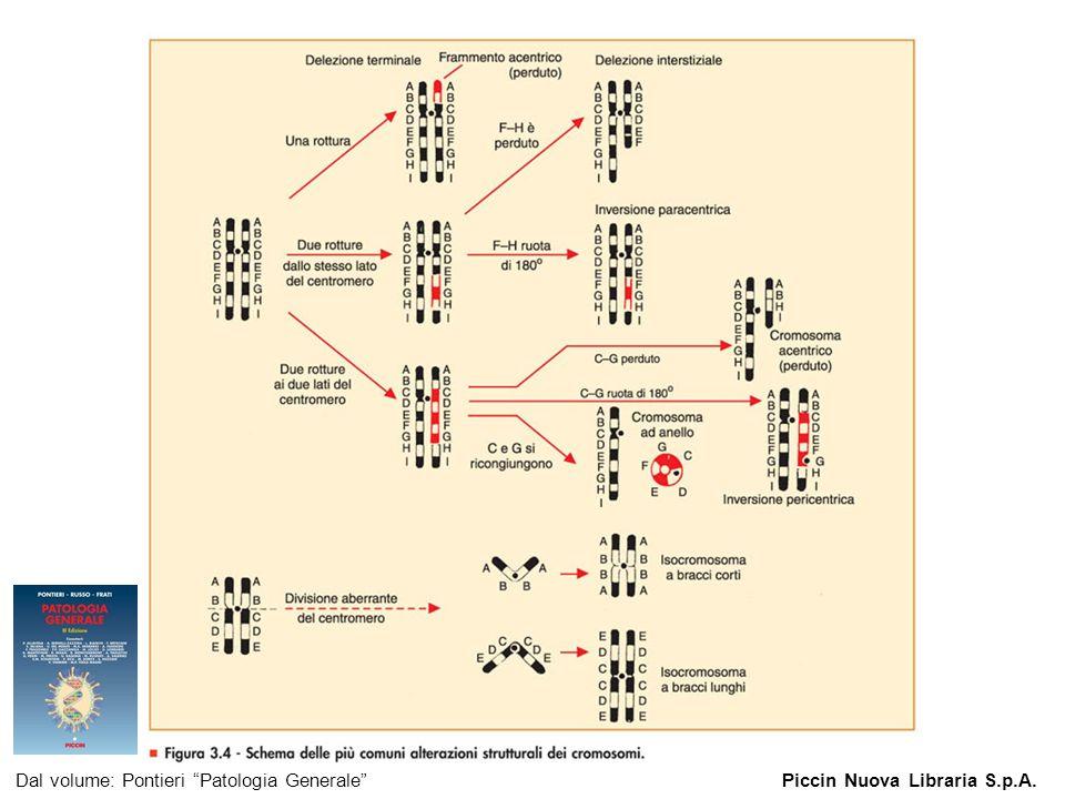 Figura 3.4 - Schema delle più comuni alterazioni strutturali dei cromosomi.