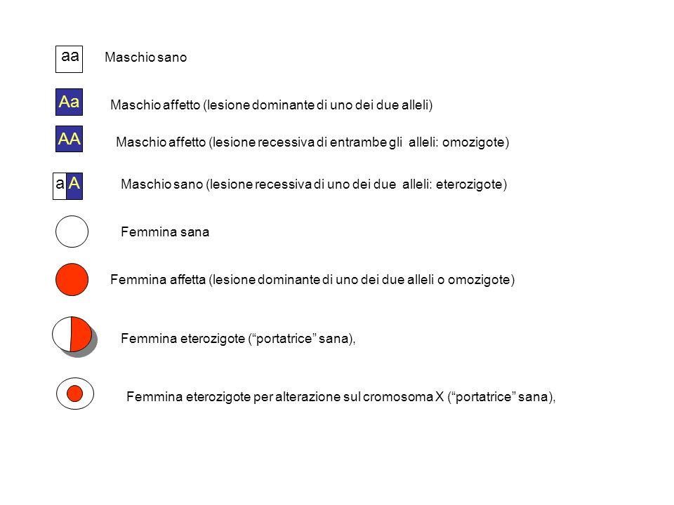aa Maschio sano. Aa. Maschio affetto (lesione dominante di uno dei due alleli) AA.