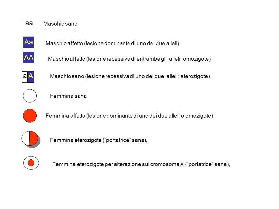 aaMaschio sano. Aa. Maschio affetto (lesione dominante di uno dei due alleli) AA.