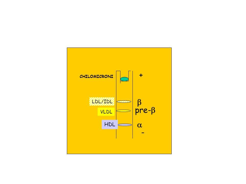 + CHILOMICRONI b LDL/IDL pre-b VLDL a HDL -