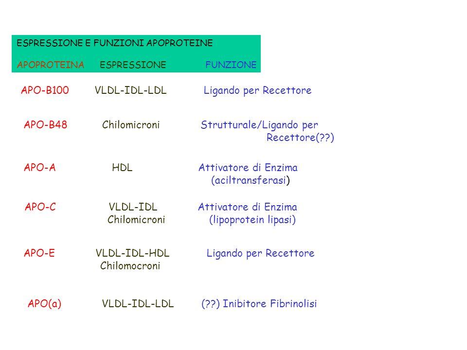APO-B100 VLDL-IDL-LDL Ligando per Recettore
