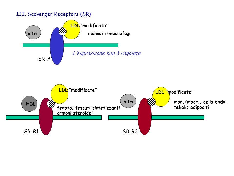 III. Scavenger Receptors (SR)