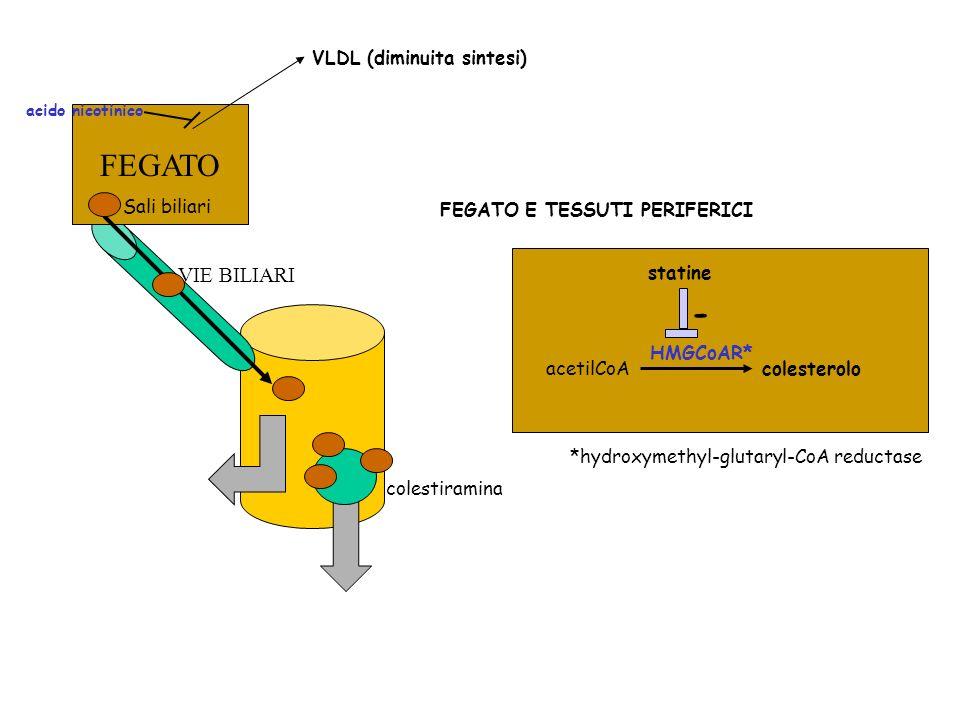 FEGATO - VIE BILIARI VLDL (diminuita sintesi) Sali biliari