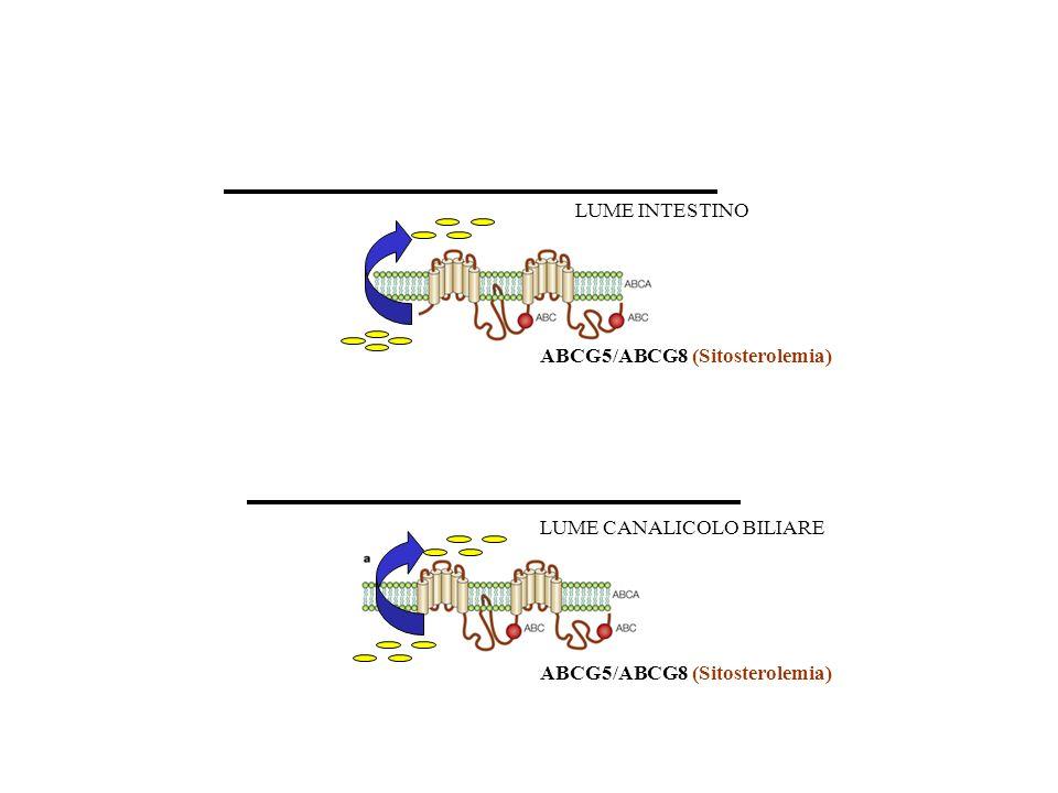 LUME INTESTINO ABCG5/ABCG8 (Sitosterolemia) LUME CANALICOLO BILIARE ABCG5/ABCG8 (Sitosterolemia)