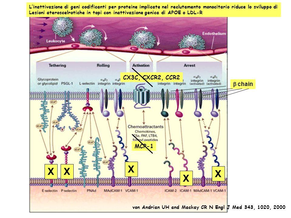 X X X X X CX3C, CXCR2, CCR2 b chain MCP-1