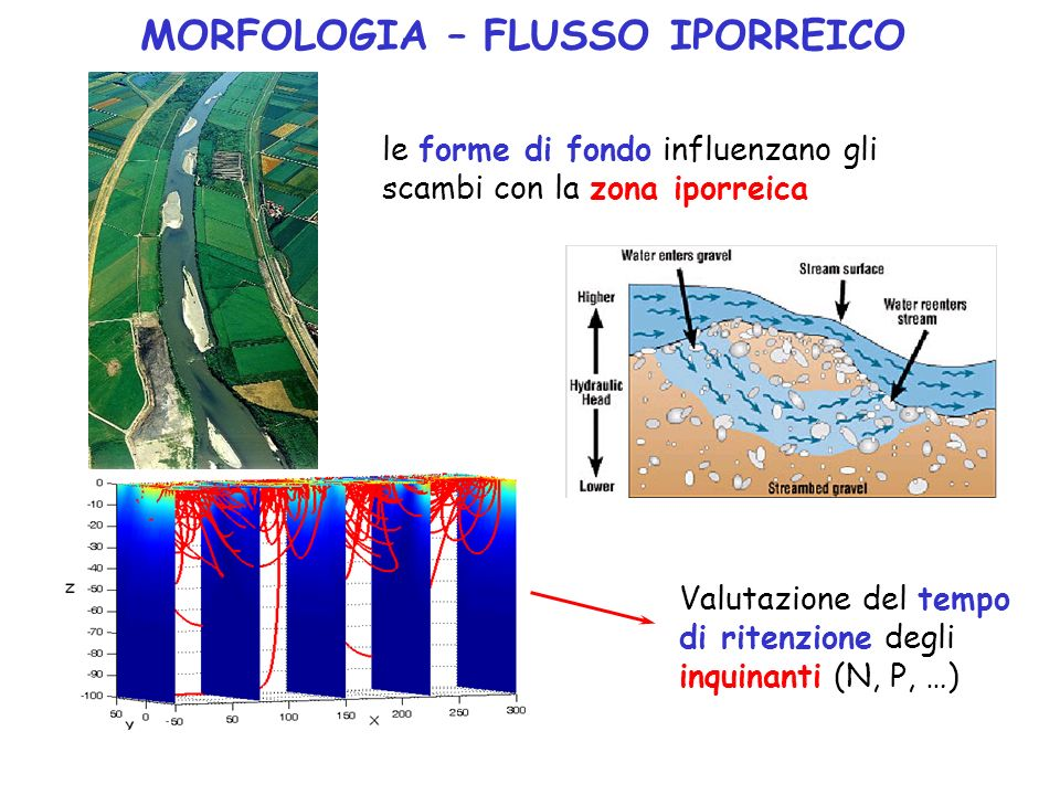 MORFOLOGIA – FLUSSO IPORREICO