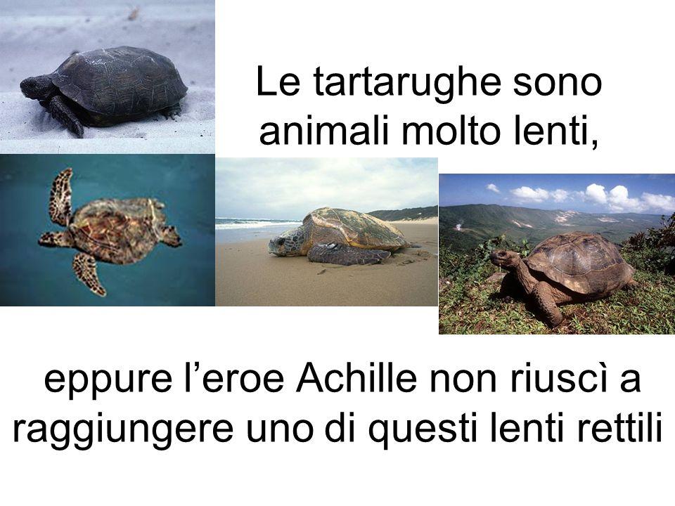 Le tartarughe sono animali molto lenti, eppure l'eroe Achille non riuscì a raggiungere uno di questi lenti rettili