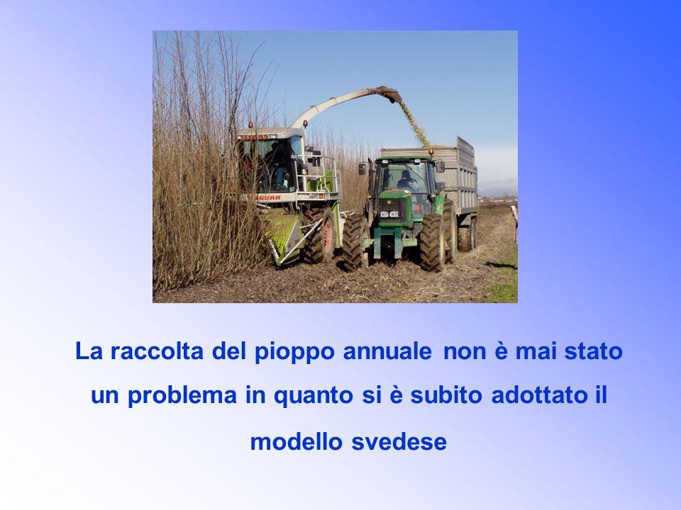 La raccolta del pioppo annuale non è mai stato un problema in quanto si è subito adottato il modello svedese