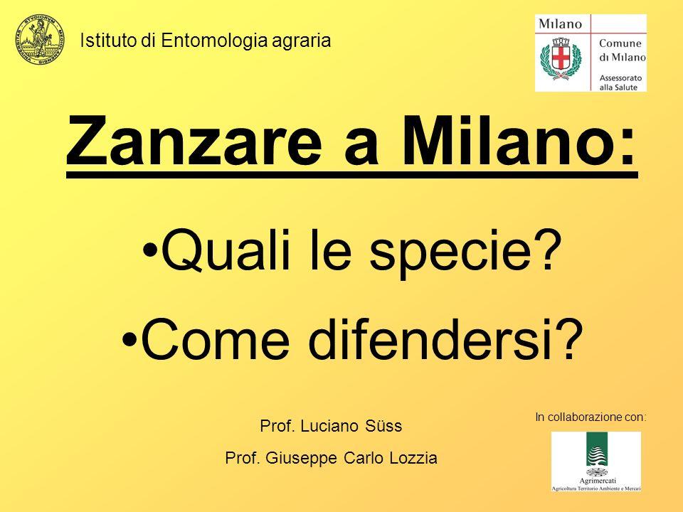 Zanzare a Milano: Quali le specie Come difendersi