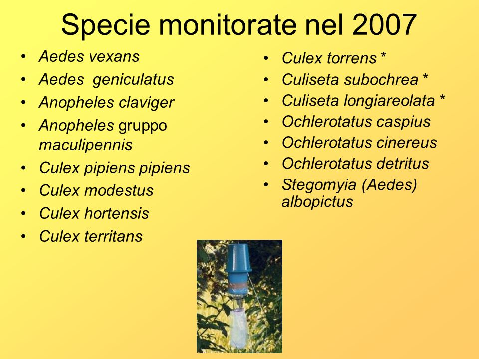 Specie monitorate nel 2007 Aedes vexans Aedes geniculatus