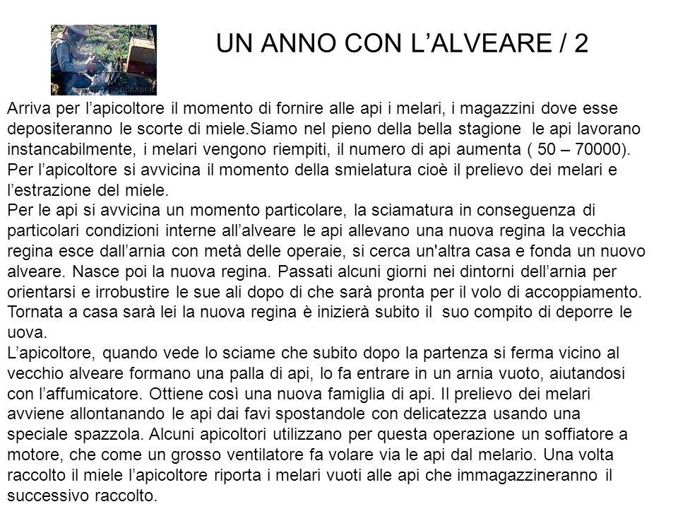 UN ANNO CON L'ALVEARE / 2