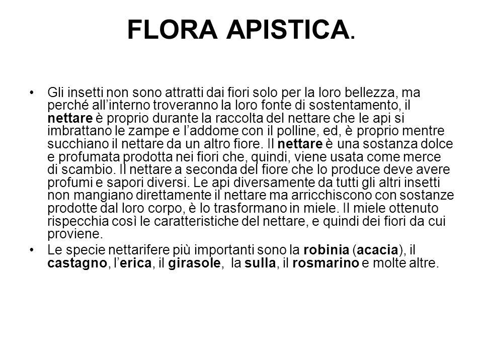 FLORA APISTICA.