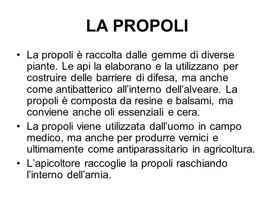 LA PROPOLI