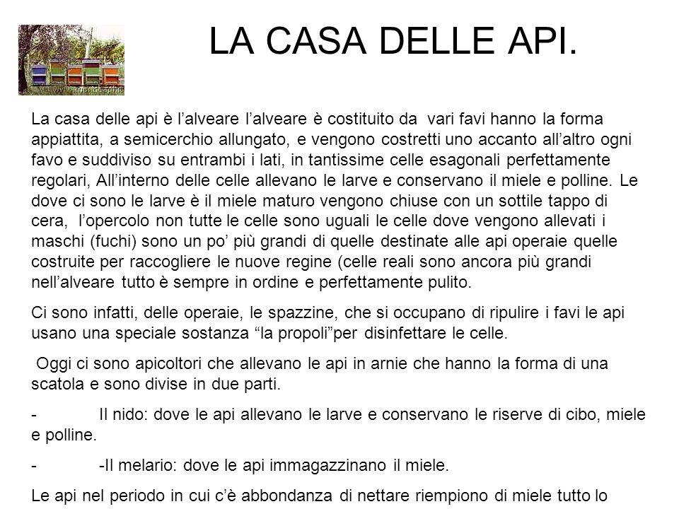 LA CASA DELLE API.