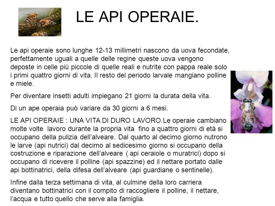 LE API OPERAIE.