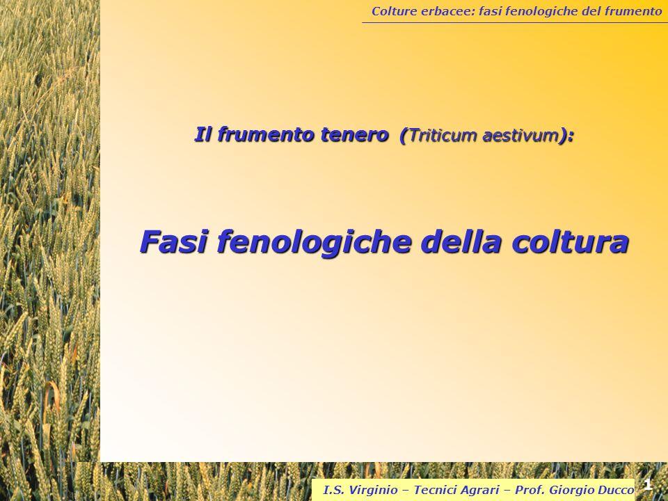 Il frumento tenero (Triticum aestivum): Fasi fenologiche della coltura