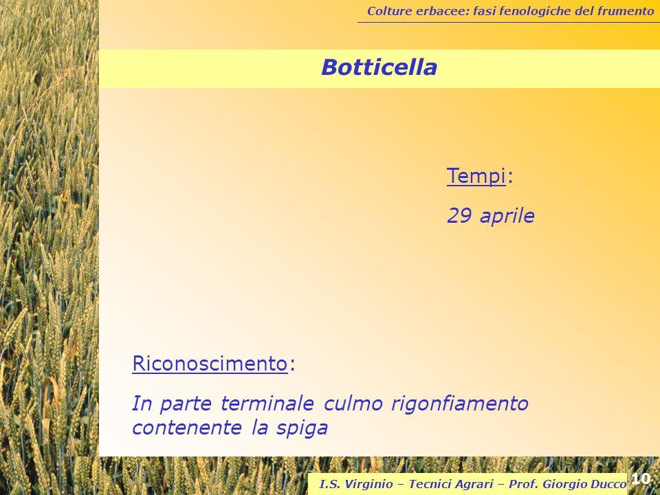 Botticella Tempi: 29 aprile Riconoscimento: